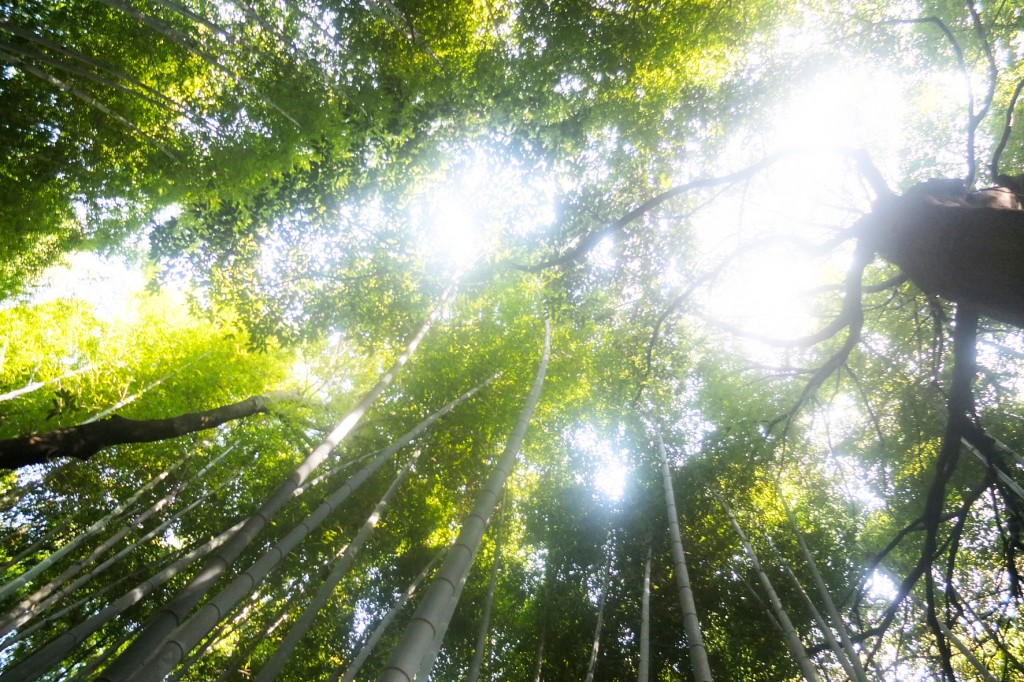 kyoto bambouseraie (1)
