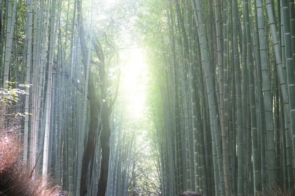 kyoto bambouseraie