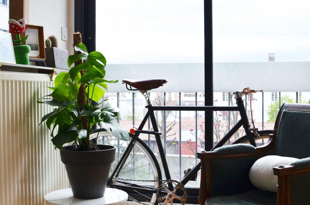Une plante dans mon salon (3)
