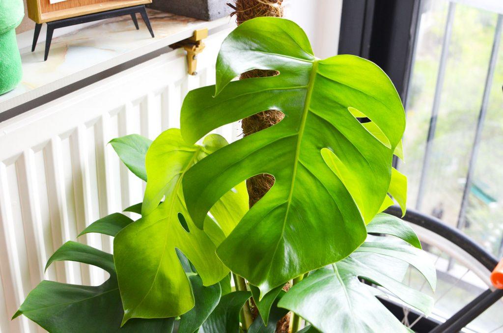 Une plante dans mon salon (4)