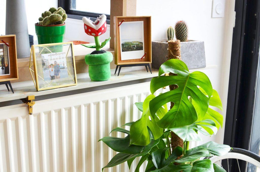 Une plante dans mon salon (7)