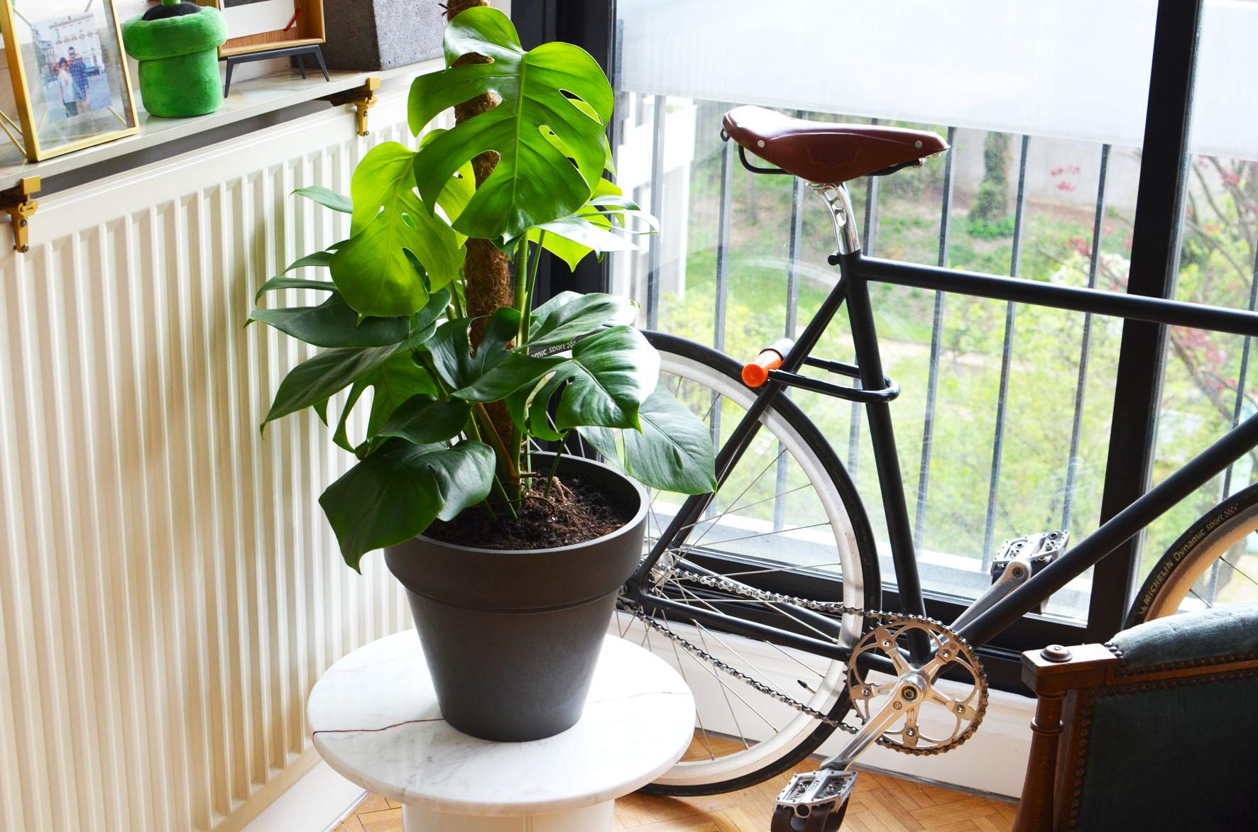 Une plante dans mon salon